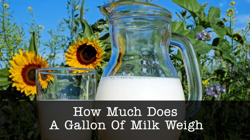 gallon of milk weigh