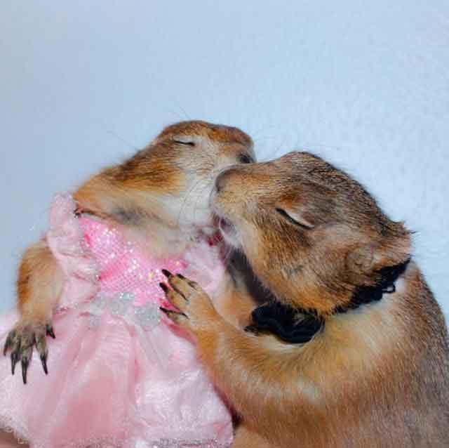 squirrels kissing